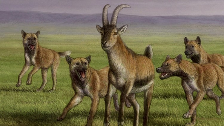 This Was Our Planet's First Hunting Dog Who Lived Alongside Proto-Humans