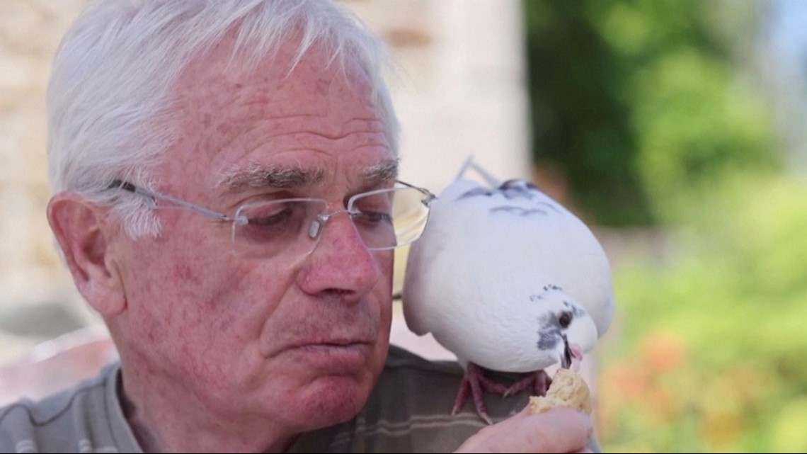 This Pigeon has a Special Human Friend