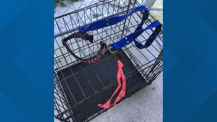 Dog tied to crate Georgia