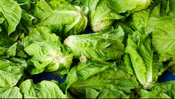Don't eat romaine lettuce from Salinas, California, US officials say