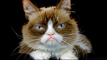 World famous Grumpy Cat has died