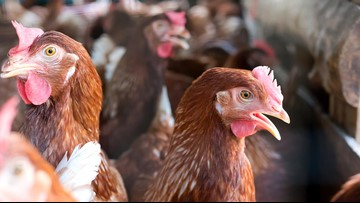 New Oregon law requires cage-free commercial eggs by 2024
