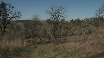 Grant's Getaways: Oregon wine country