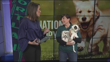 Celebrate National Puppy Day with the Doggie Dash