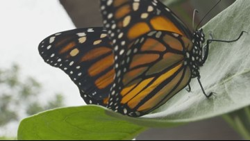 Grant's Getaways: A Butterfly Playground