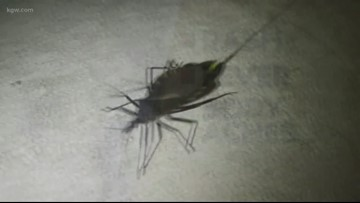 Good to know: Kissing bugs found further north