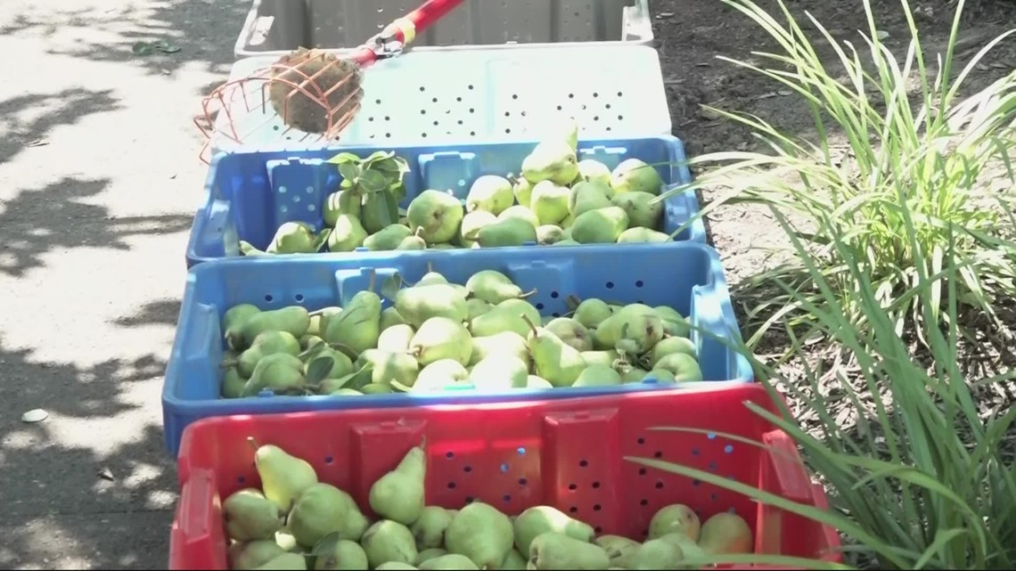 Portland nonprofit that distributes fresh fruit to community in need of volunteers, donations