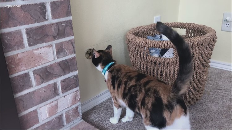 Rescue cat detects dangerous gas leak at Lake Oswego home, saving owners