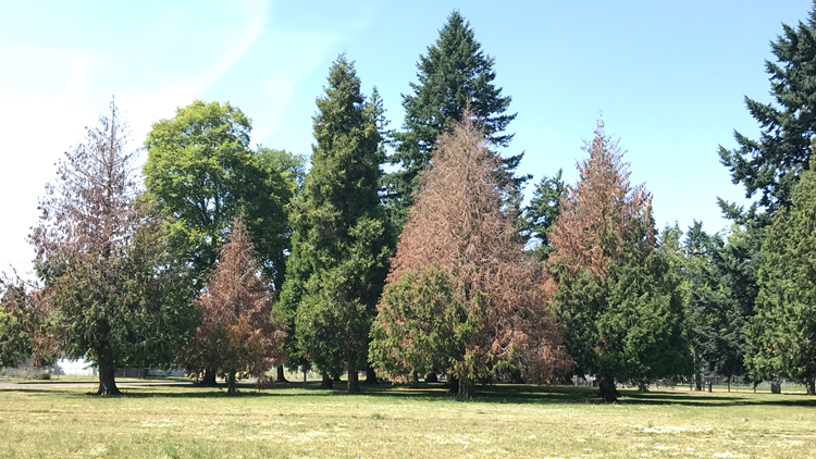 Dead trees in Lents Park
