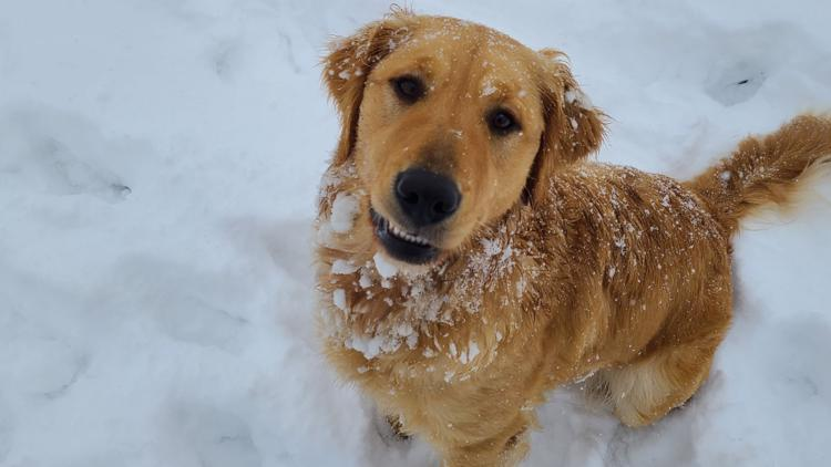 Snow Dogs: Your pups enjoying the powder