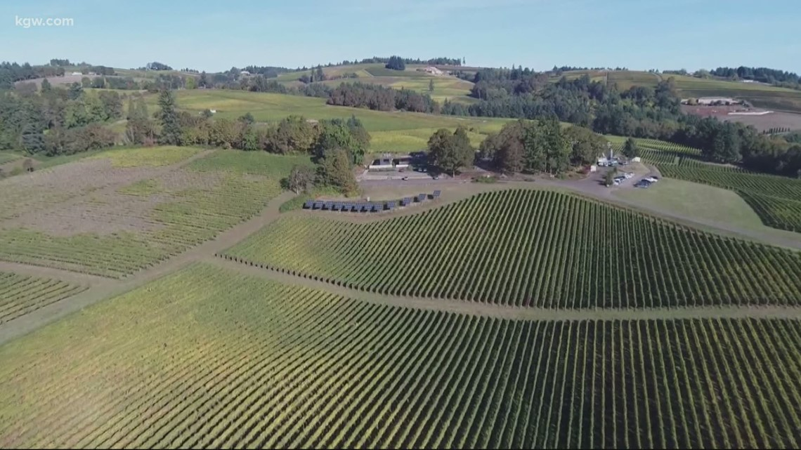 Yamhill County wineries to reopen indoor tasting rooms