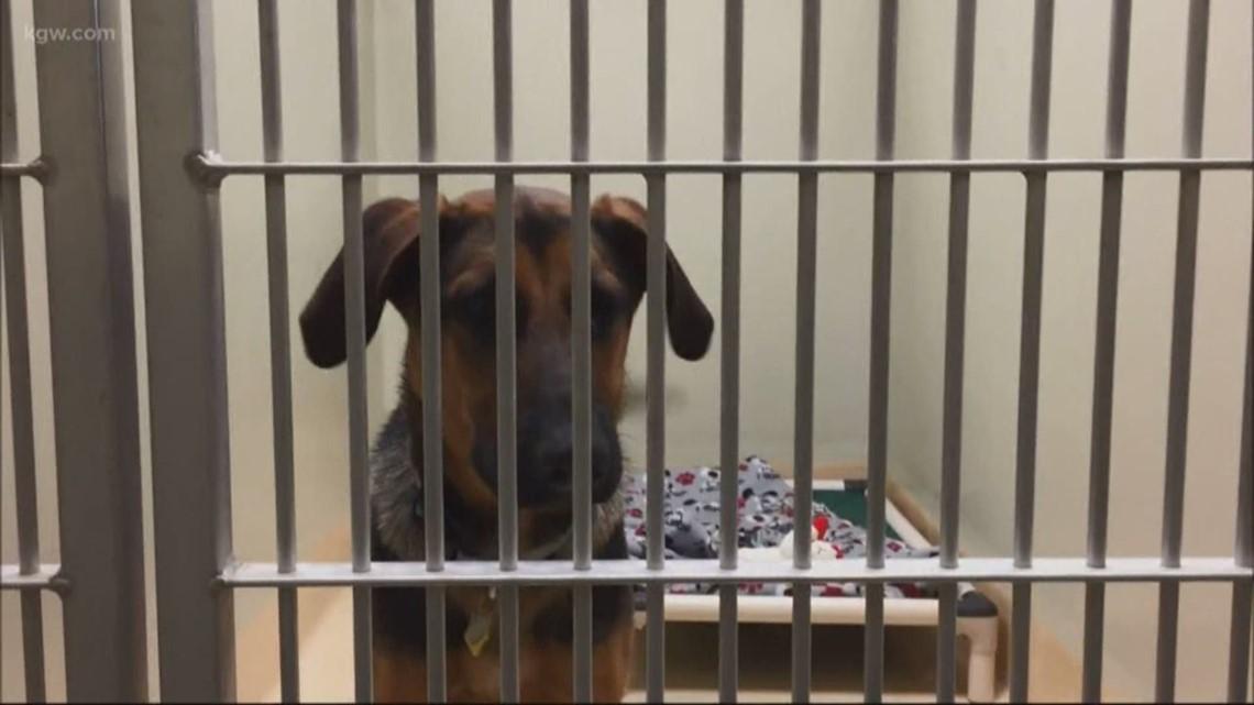 Oregon Humane Society resumes adoptions