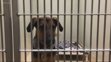 Oregon Humane Society resumes pet adoptions by appointment only