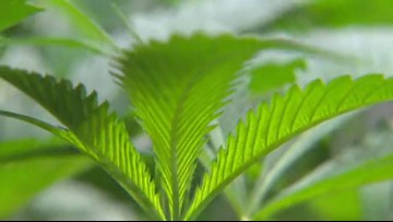 How Portland is spending cannabis tax revenue?