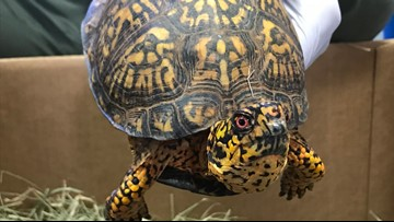 Chinese national pleads guilty to smuggling turtles from U.S. to China