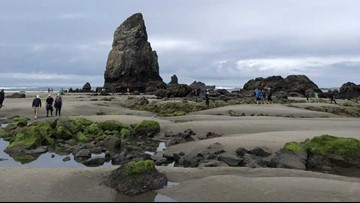 Photos Low Tide At Haystack Rock Kgw Com