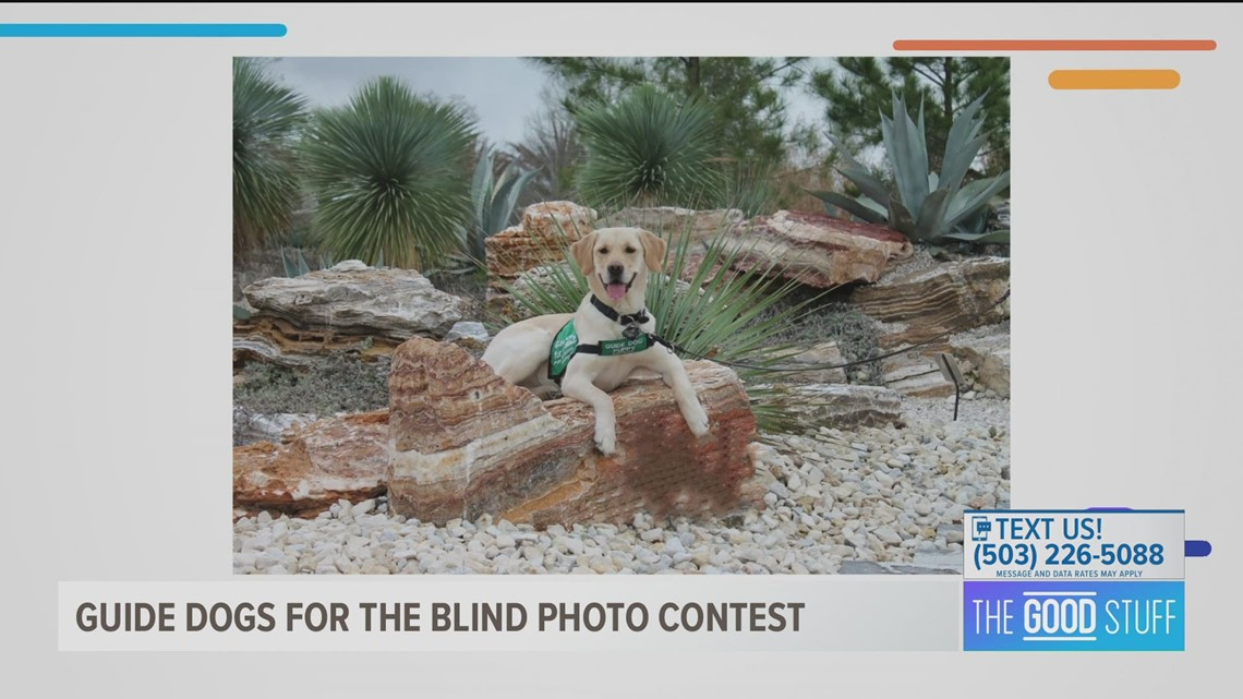 Guide Dogs for the Blind kicks off photo contest and fundraiser
