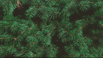 Where can you recycle your Christmas trees in Portland?