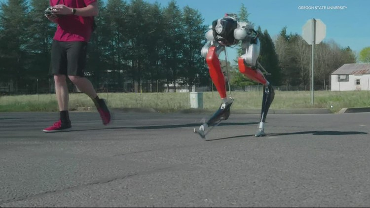Robot developed at Oregon State makes history with a 5K run