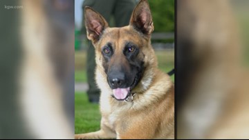 'His legacy is going to live on': Deputies mourn loss of beloved K-9