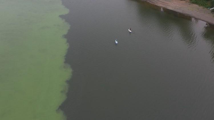 Toxic algae in Willamette River harmful for dogs   kgw.com