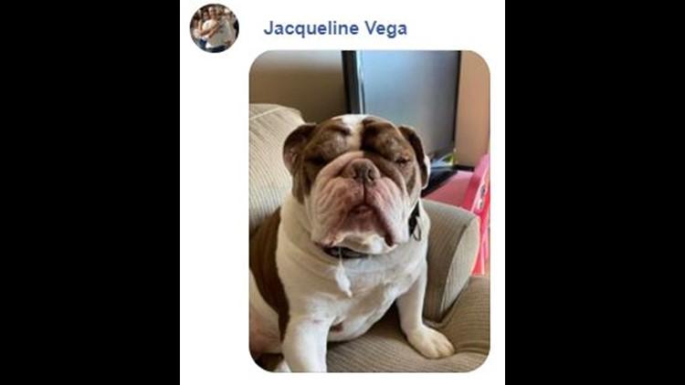 dog on facebook