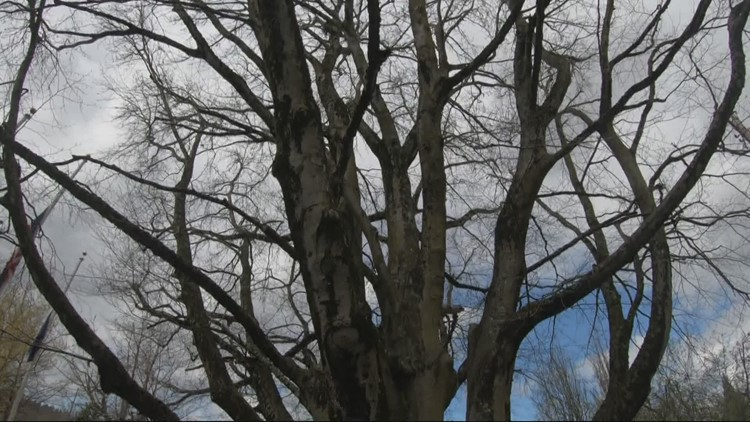 Milwaukie named Tree City of the Year for 2021
