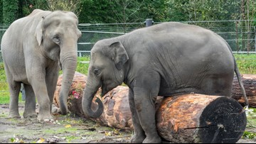 Animal rights activists hold vigil, protest at Oregon Zoo following Lily's death