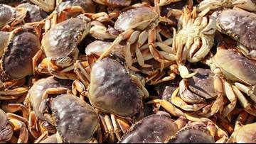 Commercial ocean crabbing delayed in Oregon