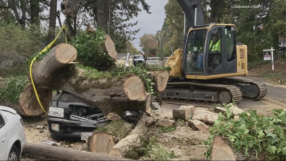 Wind and rain bring down trees, clog storm drains in Portland