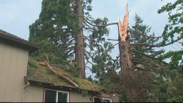 Gladstone residents stunned after lightning shatters tree