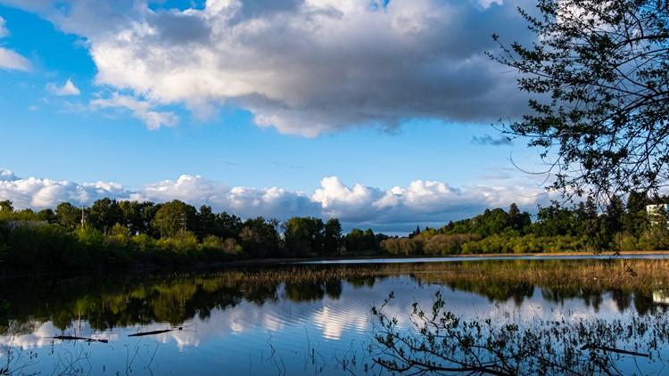 Swans at Portland's Oaks Bottom Wildlife Refuge inspire photographer to create video