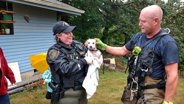 Gresham Fire rescues dog from steep hill near 100 ft. drop off