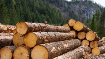 Oregon forests remain open for logging and timber sales during coronavirus pandemic