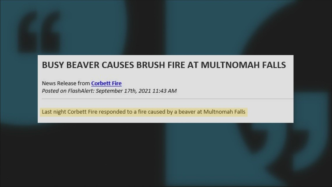 Tree-chomping beaver starts brush fire near Multnomah Falls