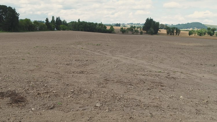 The Yamhill Co. property after a neighbor purchased the land and cleaned it up.