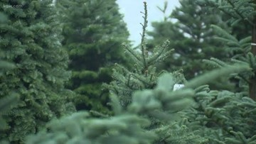 Christmas tree farmers aim to boost sales via social media