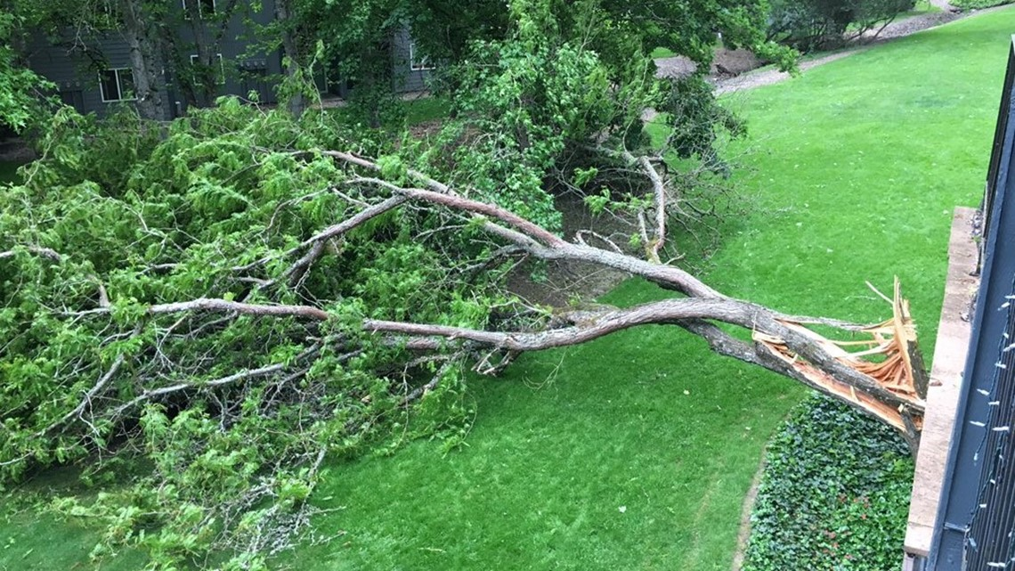 Downed trees, power outages in Washington County after storm blows through area