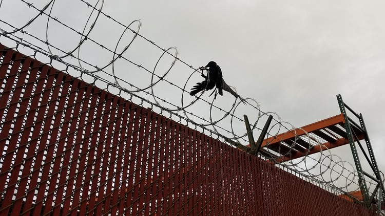Watch: PGE, TriMet workers free crow trapped in razor wire fence