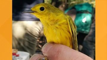 Grant's Getaways: Songbird science