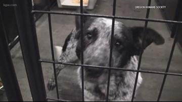 Dog adoptions resume at Oregon Humane Society on Saturday