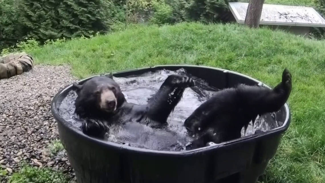 Out & About: Meet the black bears at the Oregon Zoo