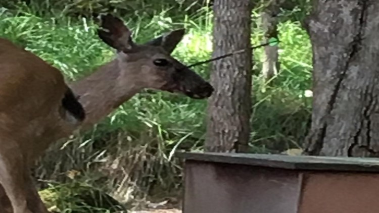 Oregon State Police is asking for the public's help with discovering who shot a deer in the head with an arrow.