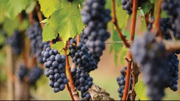 Senate passes bills protecting Oregon pinot noir identity, grape regions
