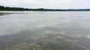 Toxic algae warning issued for Vancouver Lake