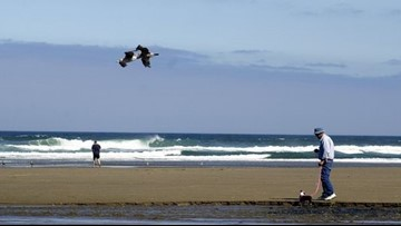 Fecal bacteria advisory lifted for beaches in Lincoln City, Rockaway