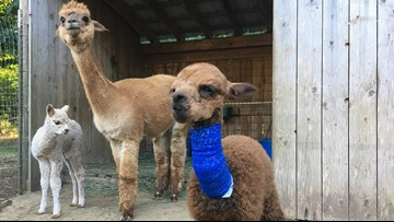Stories you loved: KGW's 10 most-read heartwarming stories of 2018