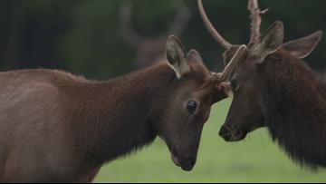 Grant's Getaways: Elk Watch