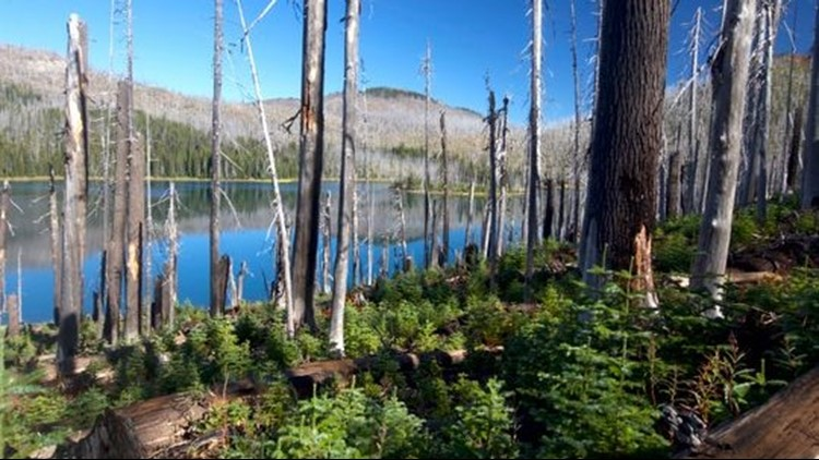 Mowich Lake in the Mount Jefferson Wilderness shows both trees burned by the B&B Comple8c3668c7-770f-499a-9d1b-8e60eadd39e7-IMG_1760_1538253986023.jpg