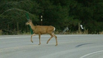 Eating roadkill in Oregon legal Tuesday; follow these rules first